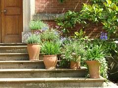 Stilleben trapp växter