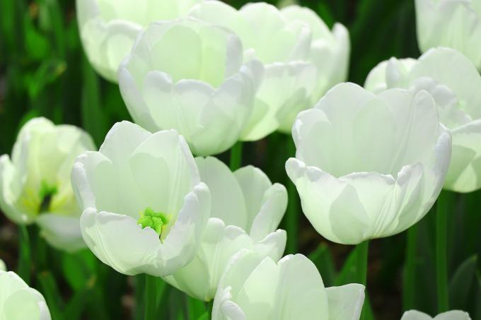 Feng Shui blogg trädgård